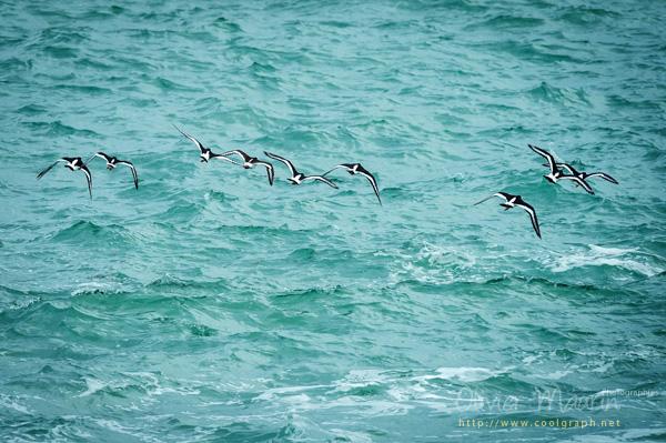 Faune Bretonne Oiseaux en vol
