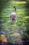 Le bébé guépard à l'assaut